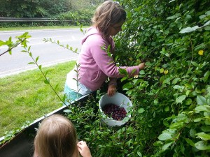 The Girls Foraging